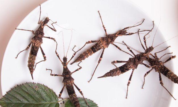 Insekten essen – Das Nahrungsmittel der Zukunft?
